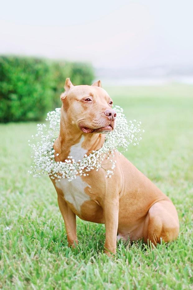 DIY Floral Dog Wedding Wreath