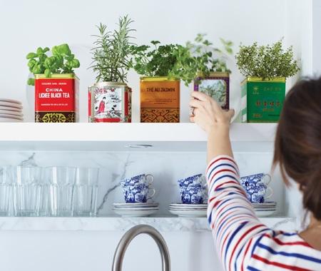 DIY Tea Tin Herbs