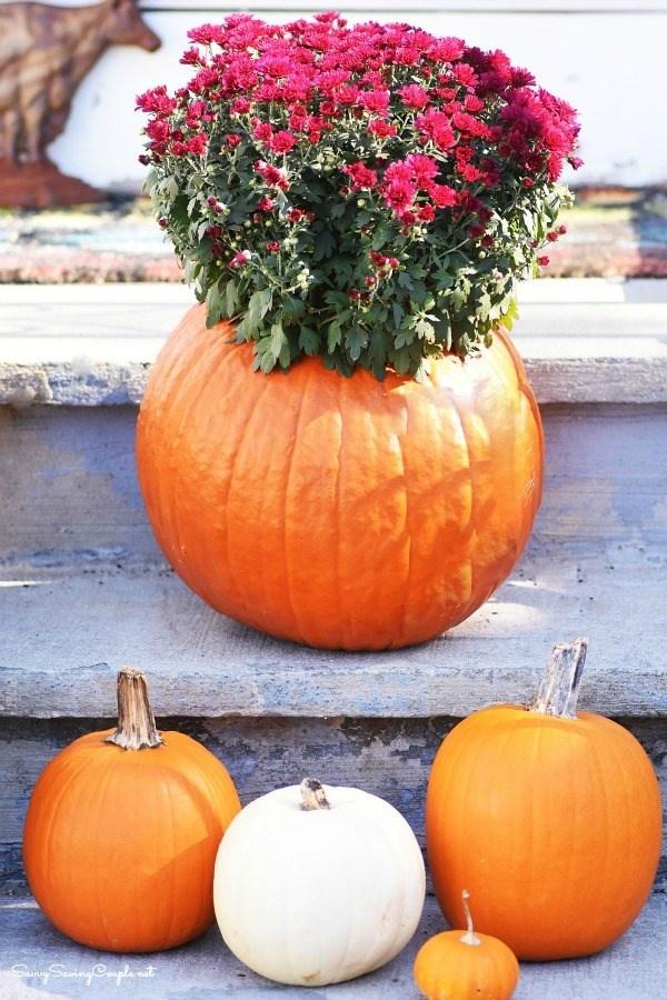 How to Make a Festive Pumpkin Mums Planter