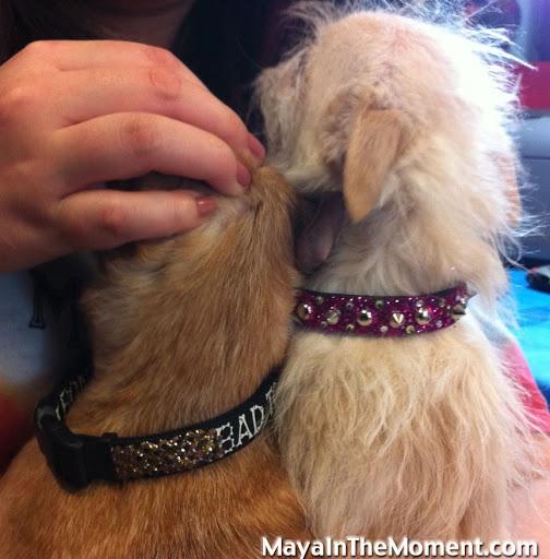 CRAFT Naughty & Nice Dog Collars