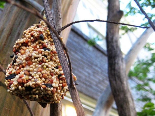 How to Make Homemade Bird Feeders