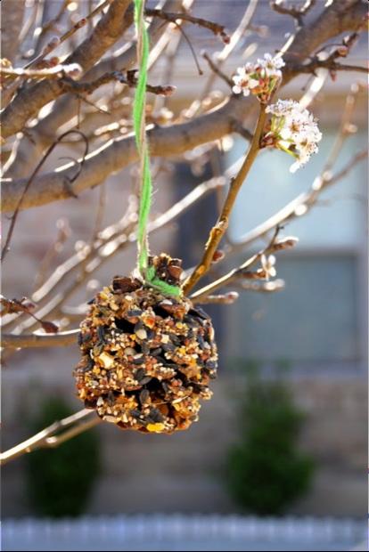 DIY Pinecone Bird Feeder