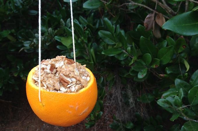Fun and Easy DIY Bird Feeders