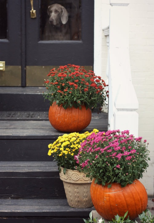 How To Fall Pumpkin Planters