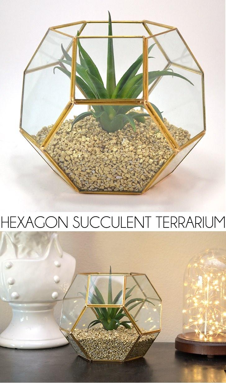 Hexagon Succulent Terrarium
