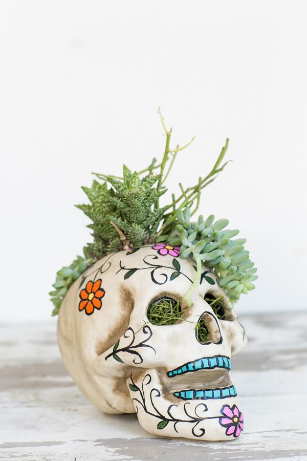 Succulent Halloween Skull Centerpiece