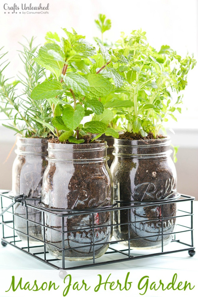 DIY Herb Garden In Mason Jars