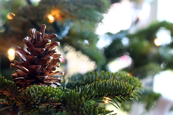 Squirrelly Minds ? DIY Holiday Golden Pinecone Christmas Tree