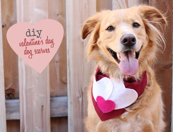 Diy valentine's day dog scarves