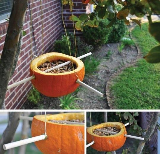 Weekend Project Pumpkin Bird Feeder
