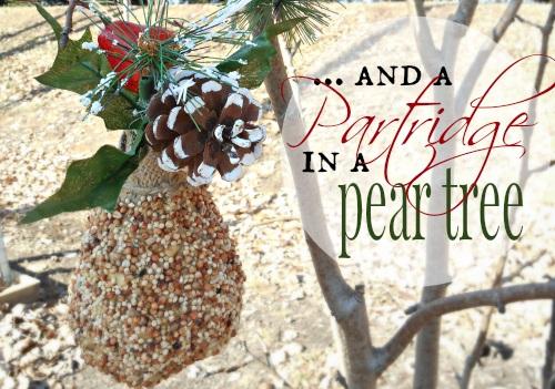 Partridge In A Pear Tree ... An Easy Bird Feeder