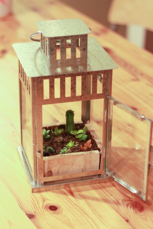 Succulent Lantern Planter DIY
