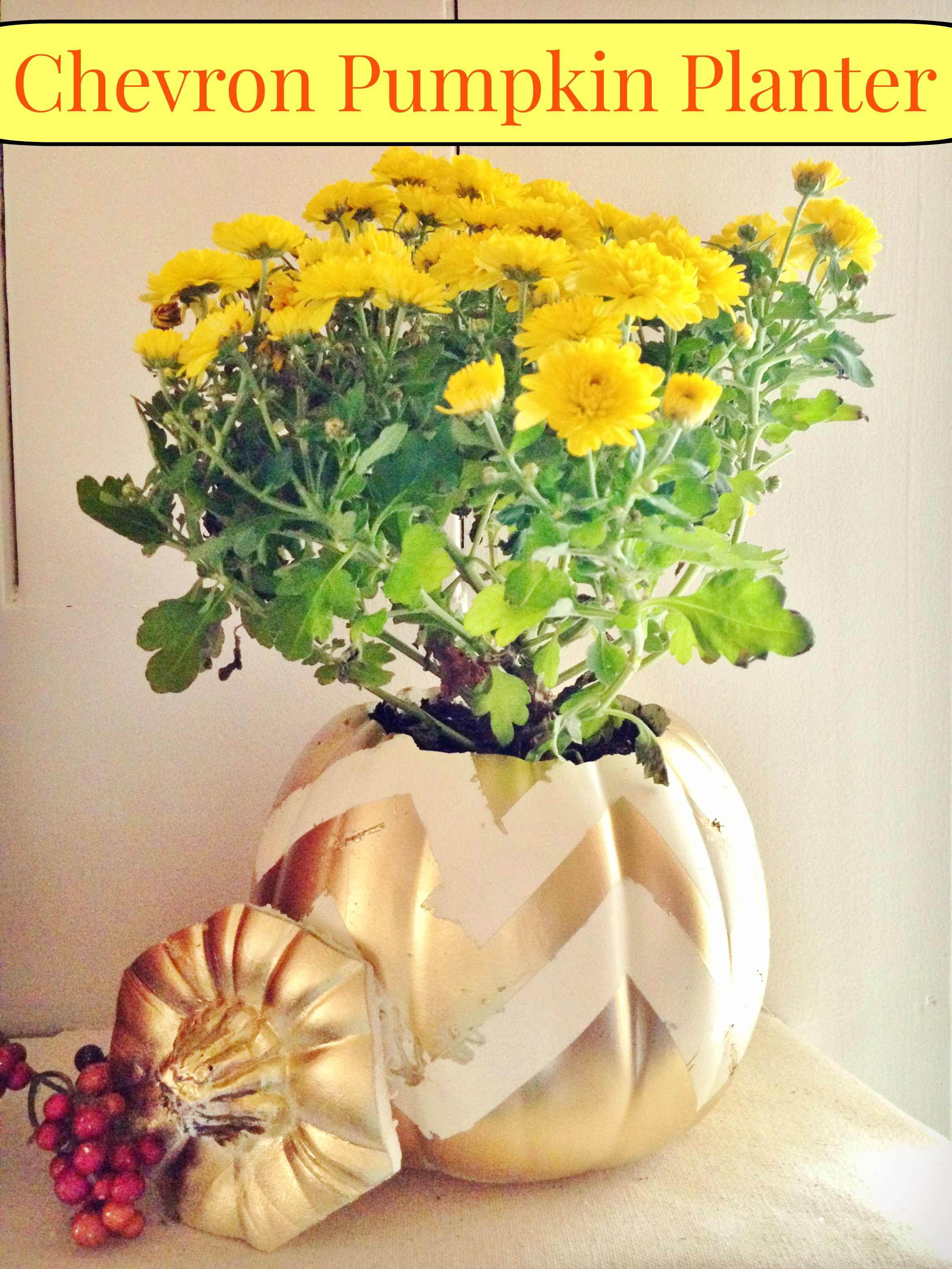 DIY Chevron Pumpkin Planter Frugal Fall Home Decor Craft